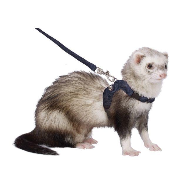 Marshallferretscom Ferret Walking Jacket