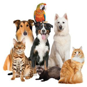 Pet Group